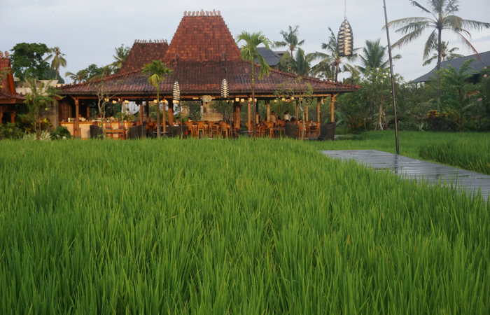 10 Amazing and Cultural Activities in Ubud You Must Try