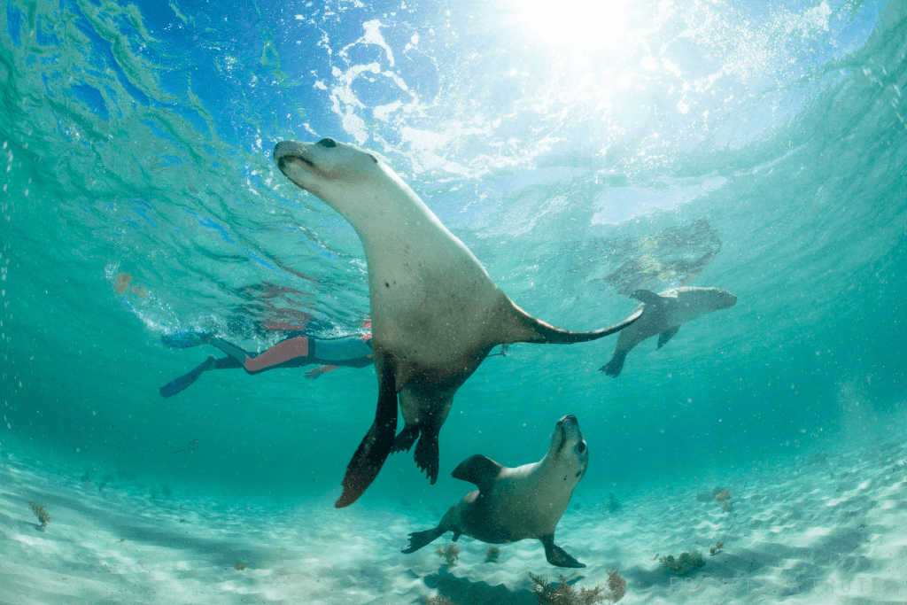 An Adventurous Sea Lion Tours in Jurien Bay with Turquoise Safari