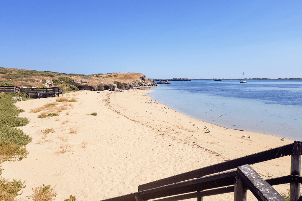 Awesome things to do in Penguin Island – Perth – Western Australia